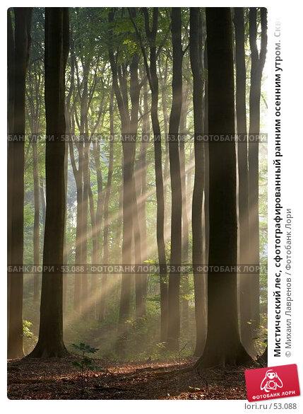 Мистический лес, сфотографированный ранним осенним утром. Сквозь изображение проходят солнечные лучи., фото № 53088, снято 30 марта 2017 г. (c) Михаил Лавренов / Фотобанк Лори