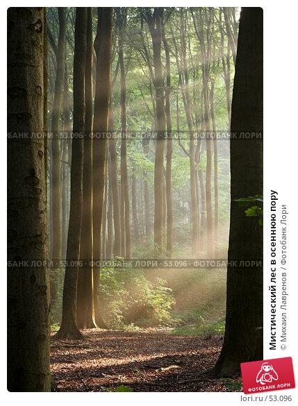 Мистический лес в осеннюю пору, фото № 53096, снято 27 октября 2016 г. (c) Михаил Лавренов / Фотобанк Лори