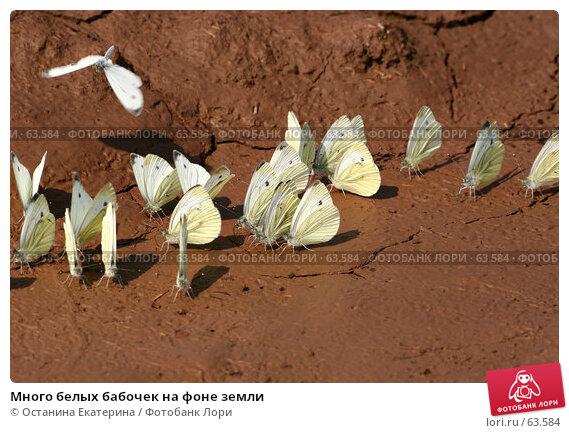 Много белых бабочек на фоне земли, фото № 63584, снято 7 июля 2007 г. (c) Останина Екатерина / Фотобанк Лори