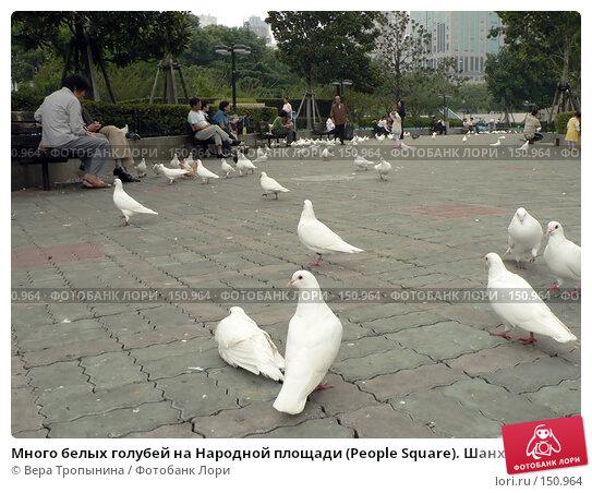 Много белых голубей на Народной площади (People Square). Шанхай. Китай, фото № 150964, снято 27 мая 2017 г. (c) Вера Тропынина / Фотобанк Лори