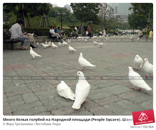 Много белых голубей на Народной площади (People Square). Шанхай. Китай, фото № 150964, снято 30 марта 2017 г. (c) Вера Тропынина / Фотобанк Лори