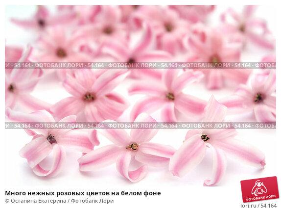 Много нежных розовых цветов на белом фоне, фото № 54164, снято 13 марта 2007 г. (c) Останина Екатерина / Фотобанк Лори