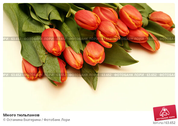 Много тюльпанов, фото № 63652, снято 7 марта 2007 г. (c) Останина Екатерина / Фотобанк Лори