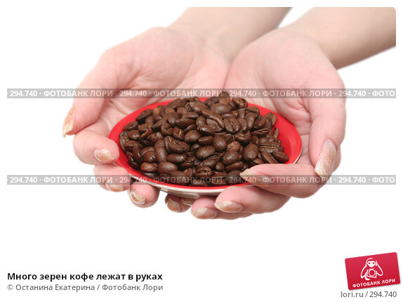 Много зерен кофе лежат в руках, фото № 294740, снято 8 декабря 2007 г. (c) Останина Екатерина / Фотобанк Лори