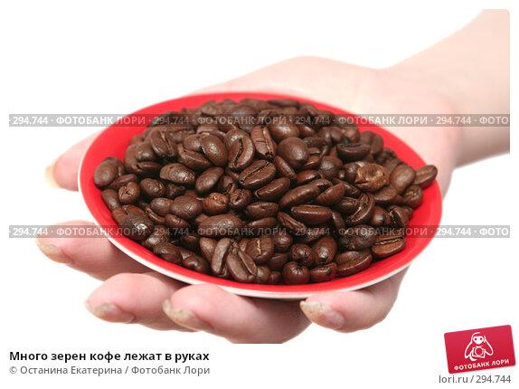 Много зерен кофе лежат в руках, фото № 294744, снято 8 декабря 2007 г. (c) Останина Екатерина / Фотобанк Лори