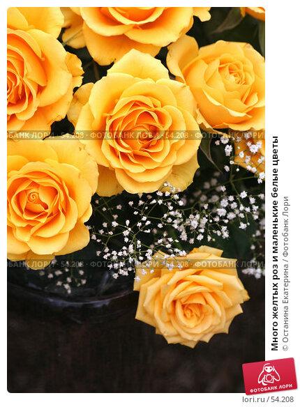 Купить «Много желтых роз и маленькие белые цветы», фото № 54208, снято 19 февраля 2007 г. (c) Останина Екатерина / Фотобанк Лори