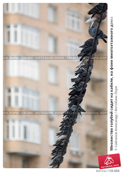 Множество голубей сидит на кабеле, на фоне многоэтажного дома, эксклюзивное фото № 139884, снято 28 ноября 2007 г. (c) Сайганов Александр / Фотобанк Лори