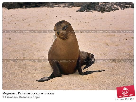 Модель с Галапагосского пляжа, фото № 151152, снято 5 декабря 2007 г. (c) Николай / Фотобанк Лори