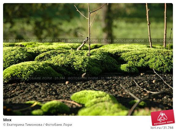 Мох, фото № 31744, снято 18 октября 2006 г. (c) Екатерина Тимонова / Фотобанк Лори