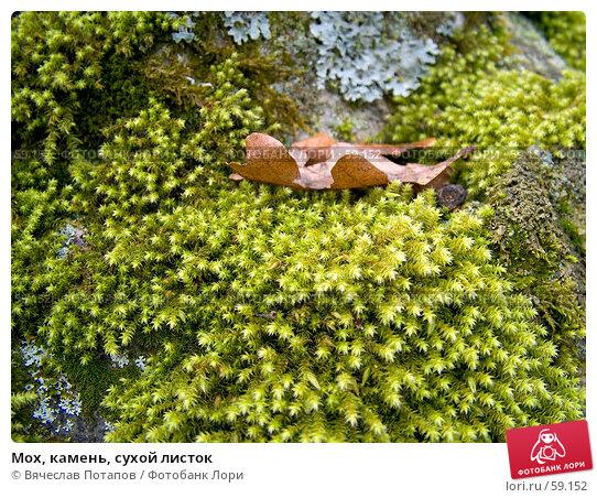 Мох, камень, сухой листок, фото № 59152, снято 1 января 2007 г. (c) Вячеслав Потапов / Фотобанк Лори