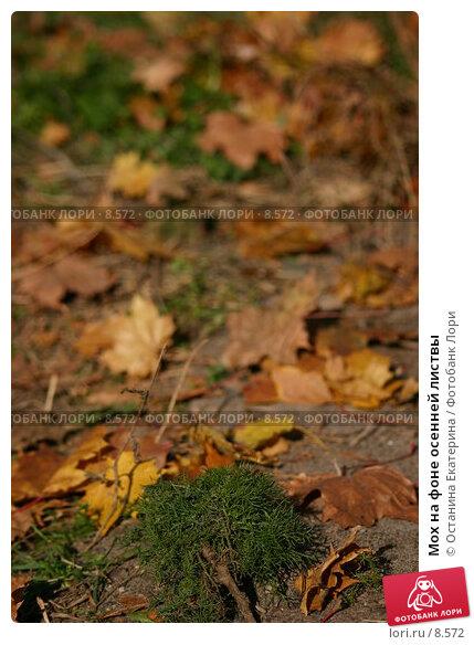 Купить «Мох на фоне осенней листвы», фото № 8572, снято 25 сентября 2005 г. (c) Останина Екатерина / Фотобанк Лори