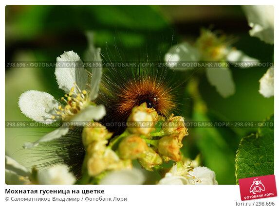 Мохнатая гусеница на цветке, фото № 298696, снято 21 января 2017 г. (c) Саломатников Владимир / Фотобанк Лори