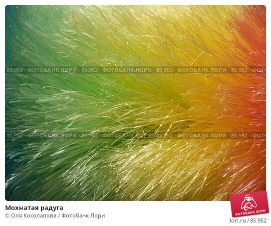 Купить «Мохнатая радуга», фото № 85952, снято 18 сентября 2007 г. (c) Оля Косолапова / Фотобанк Лори