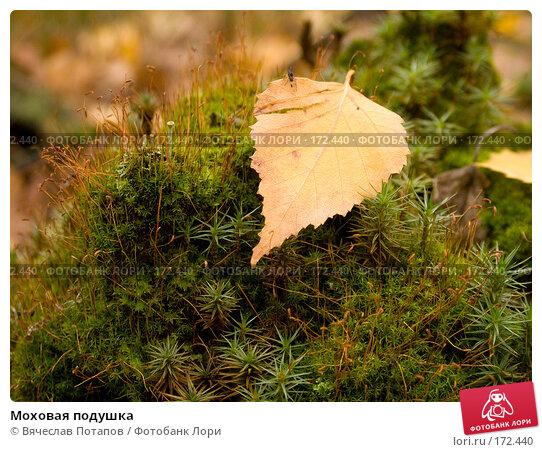 Моховая подушка, фото № 172440, снято 20 октября 2007 г. (c) Вячеслав Потапов / Фотобанк Лори