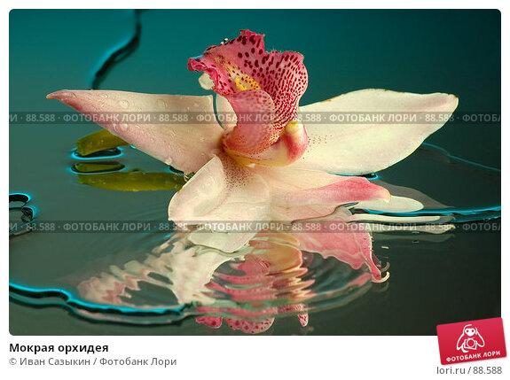 Мокрая орхидея, фото № 88588, снято 4 декабря 2003 г. (c) Иван Сазыкин / Фотобанк Лори