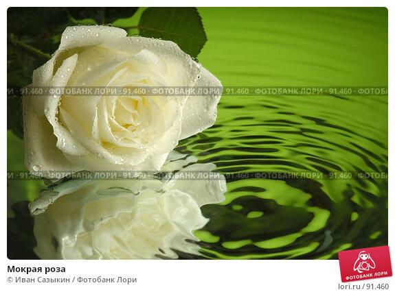 Купить «Мокрая роза», фото № 91460, снято 5 декабря 2003 г. (c) Иван Сазыкин / Фотобанк Лори