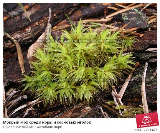 Купить «Мокрый мох среди коры и сосновых иголок», фото № 241676, снято 28 августа 2005 г. (c) Алла Матвейчик / Фотобанк Лори