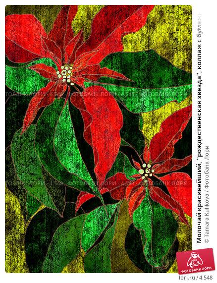 """Купить «Молочай красивейший, """"рождественская звезда"""", коллаж с бумажной фактурой», иллюстрация № 4548 (c) Tamara Kulikova / Фотобанк Лори"""