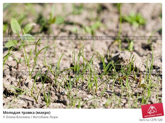 Молодая травка (макро), фото № 279120, снято 4 мая 2008 г. (c) Елена Блохина / Фотобанк Лори