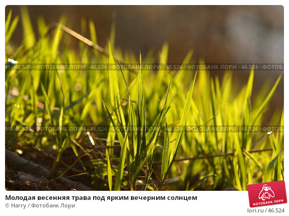 Молодая весенняя трава под ярким вечерним солнцем, фото № 46524, снято 14 июня 2005 г. (c) Harry / Фотобанк Лори