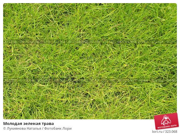 Купить «Молодая зеленая трава», фото № 323068, снято 10 июня 2008 г. (c) Лукиянова Наталья / Фотобанк Лори