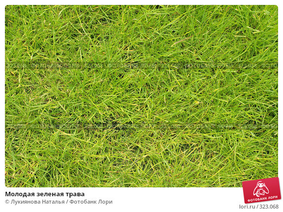 Молодая зеленая трава, фото № 323068, снято 10 июня 2008 г. (c) Лукиянова Наталья / Фотобанк Лори