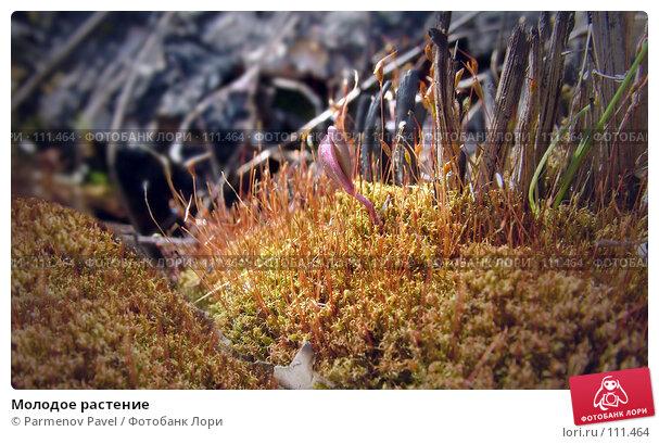 Молодое растение, фото № 111464, снято 6 мая 2007 г. (c) Parmenov Pavel / Фотобанк Лори
