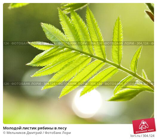 Молодой листик рябины в лесу, фото № 304124, снято 1 мая 2008 г. (c) Мельников Дмитрий / Фотобанк Лори