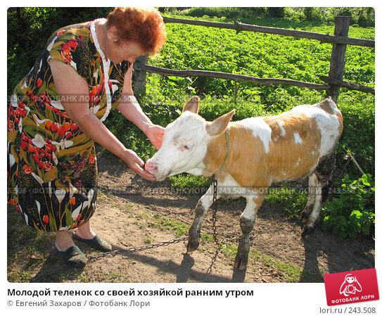 Молодой теленок со своей хозяйкой ранним утром, фото № 243508, снято 22 июня 2006 г. (c) Евгений Захаров / Фотобанк Лори