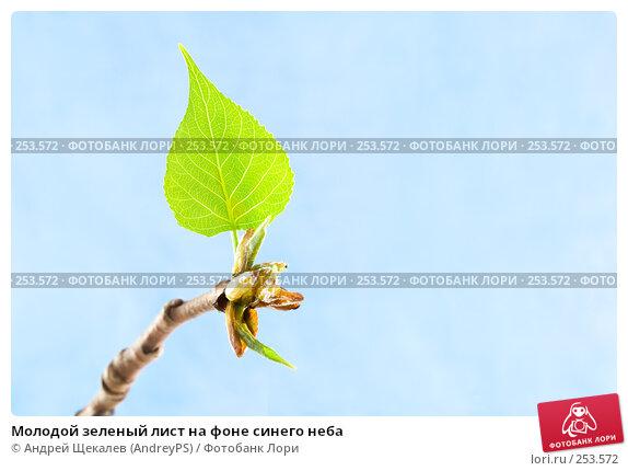 Молодой зеленый лист на фоне синего неба, фото № 253572, снято 17 апреля 2008 г. (c) Андрей Щекалев (AndreyPS) / Фотобанк Лори