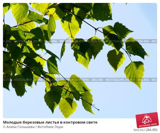Молодые березовые листья в контровом свете, эксклюзивное фото № 284456, снято 3 мая 2008 г. (c) Алина Голышева / Фотобанк Лори