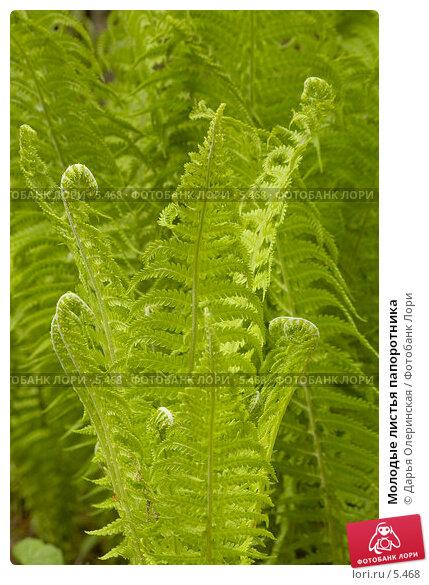 Молодые листья папоротника, фото № 5468, снято 3 июня 2006 г. (c) Дарья Олеринская / Фотобанк Лори