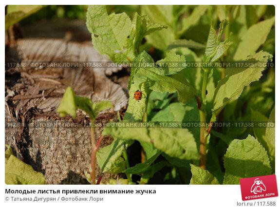 Молодые листья привлекли внимание жучка, фото № 117588, снято 27 мая 2007 г. (c) Татьяна Дигурян / Фотобанк Лори