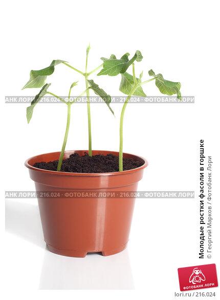 Молодые ростки фасоли в горшке, фото № 216024, снято 29 февраля 2008 г. (c) Георгий Марков / Фотобанк Лори