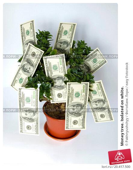 Форекс как зарабатывать деньги