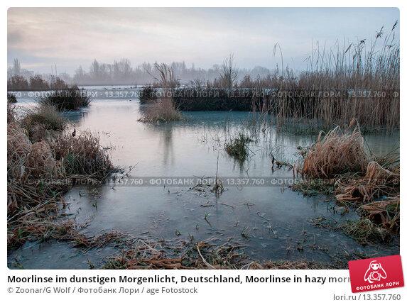 Купить «Moorlinse im dunstigen Morgenlicht, Deutschland, Moorlinse in hazy morning light, Germany», фото № 13357760, снято 23 июля 2019 г. (c) age Fotostock / Фотобанк Лори