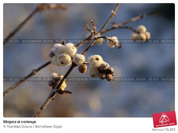 Купить «Мороз и солнце», фото № 15472, снято 21 декабря 2006 г. (c) Ткачёва Ольга / Фотобанк Лори