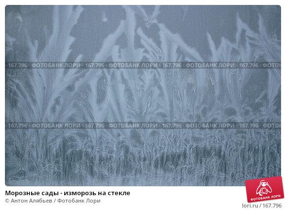 Морозные сады - изморозь на стекле, фото № 167796, снято 6 января 2008 г. (c) Антон Алябьев / Фотобанк Лори
