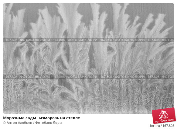 Морозные сады - изморозь на стекле, фото № 167808, снято 6 января 2008 г. (c) Антон Алябьев / Фотобанк Лори