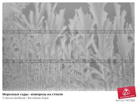 Купить «Морозные сады - изморозь на стекле», фото № 167820, снято 6 января 2008 г. (c) Антон Алябьев / Фотобанк Лори