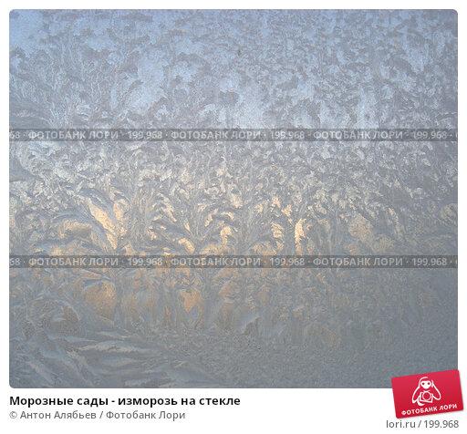 Морозные сады - изморозь на стекле, фото № 199968, снято 3 января 2008 г. (c) Антон Алябьев / Фотобанк Лори