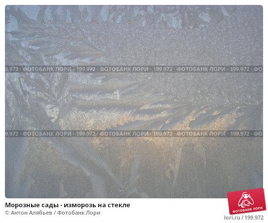 Морозные сады - изморозь на стекле, фото № 199972, снято 3 января 2008 г. (c) Антон Алябьев / Фотобанк Лори