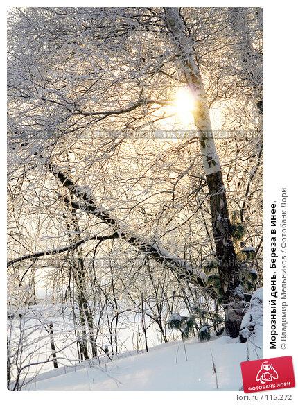 Морозный день. Береза в инее., фото № 115272, снято 1 декабря 2004 г. (c) Владимир Мельников / Фотобанк Лори