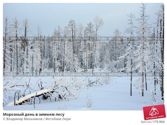 Купить «Морозный день в зимнем лесу», фото № 179904, снято 16 января 2008 г. (c) Владимир Мельников / Фотобанк Лори