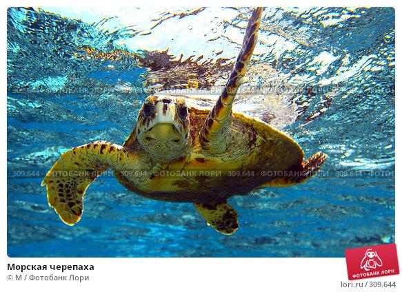 Морская черепаха, фото № 309644, снято 17 августа 2017 г. (c) Михаил / Фотобанк Лори