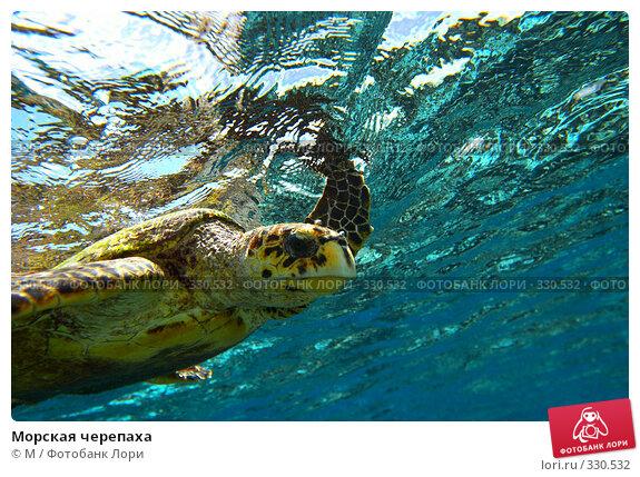 Морская черепаха, фото № 330532, снято 22 января 2017 г. (c) Михаил / Фотобанк Лори