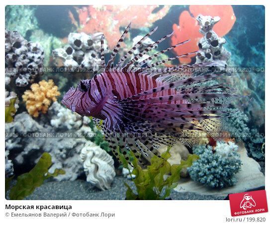 Купить «Морская красавица», фото № 199820, снято 5 июня 2007 г. (c) Емельянов Валерий / Фотобанк Лори