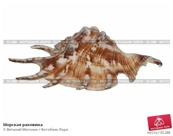 Купить «Морская раковина», фото № 33288, снято 24 ноября 2017 г. (c) Виталий Матонин / Фотобанк Лори