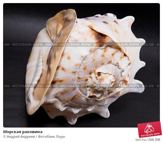 Морская раковина, фото № 268308, снято 22 апреля 2008 г. (c) Андрей Андреев / Фотобанк Лори