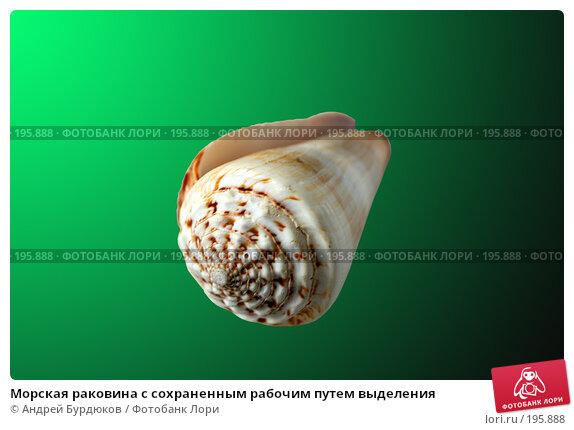 Морская раковина с сохраненным рабочим путем выделения, фото № 195888, снято 31 января 2008 г. (c) Андрей Бурдюков / Фотобанк Лори